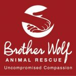 Brother Wolf Animal Rescue
